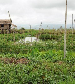 Inle Floating Gardens